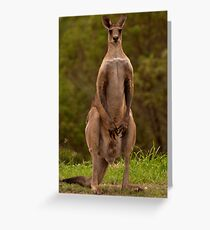 Eastern Grey Kangaroo - Australia Greeting Card