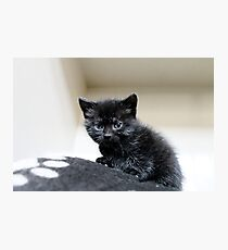 Small but purrfectly formed Photographic Print