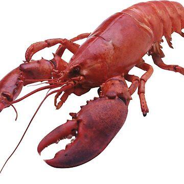 The Lobster Hierarchy - Jordan Peterson by zaktravel99