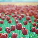 Tulips on the Horizon by Debja