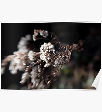 White Flowery Thing Poster