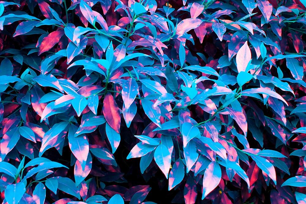 Blue Leaves by aliasfan