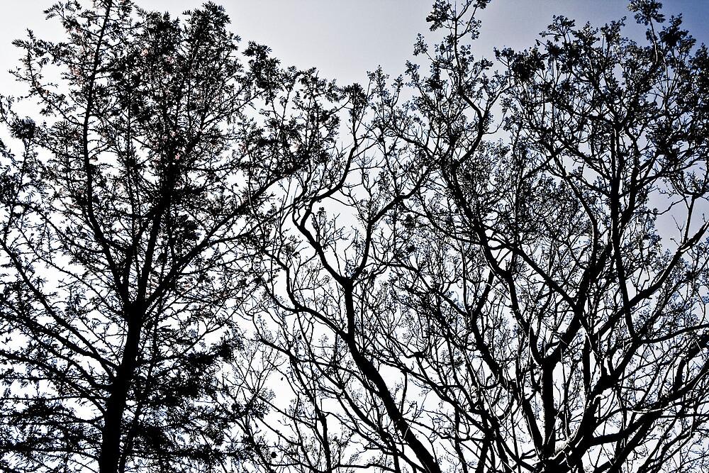 Sketchy Skies by aliasfan