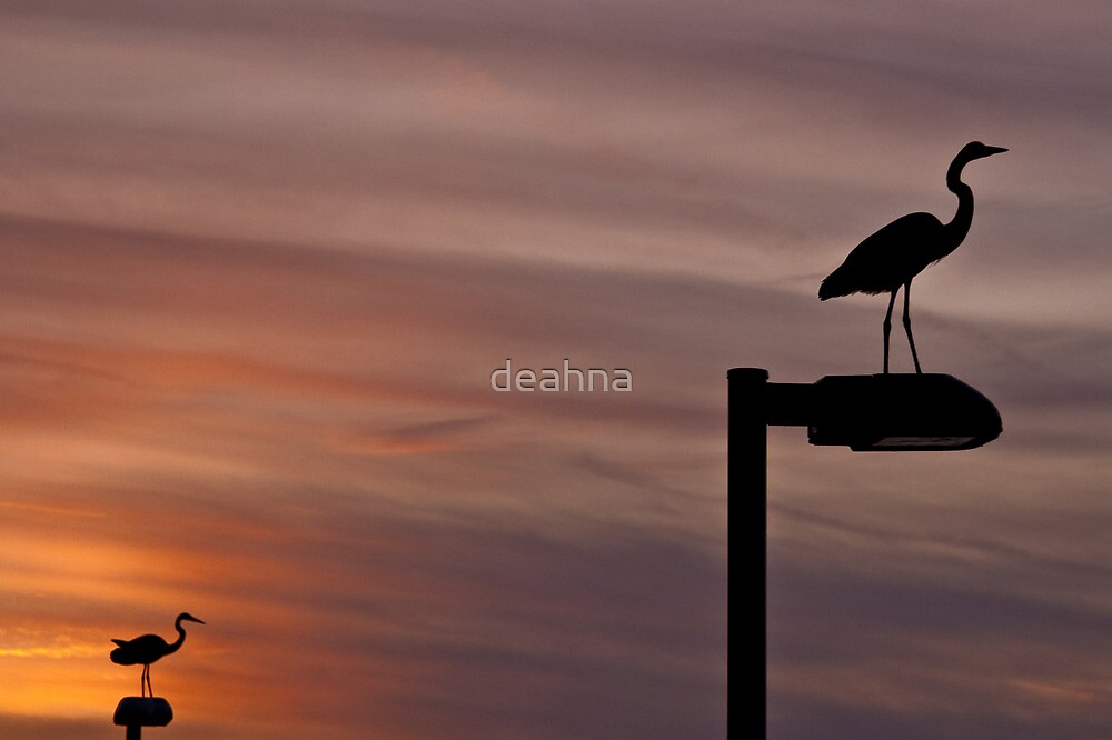Double Vision by deahna