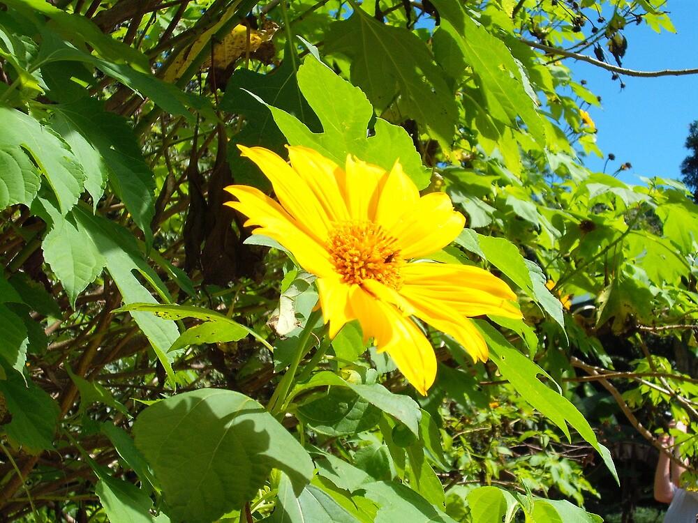 Belizean bloom by Aasma