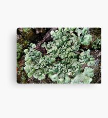 Leafy Greens Canvas Print