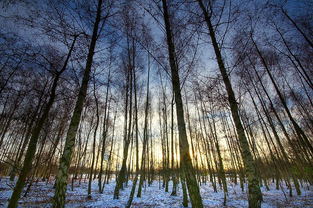 Winter Birches by Andrew Leighton