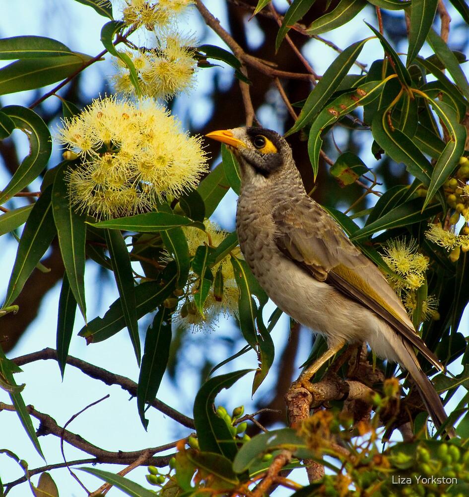 Miner Bird by Liza Yorkston