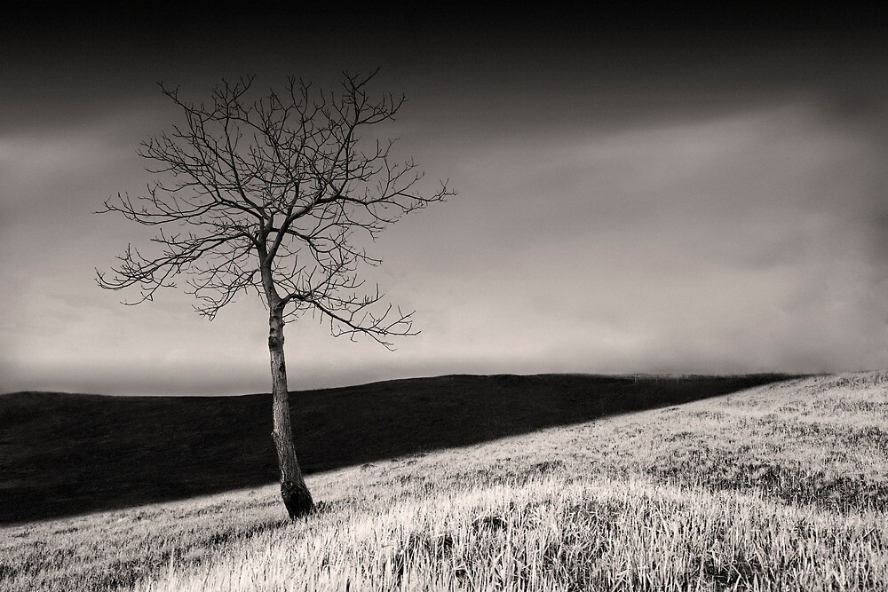 Alone by Braun