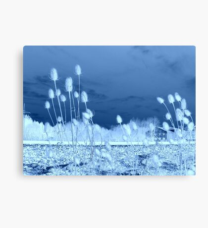 Common Teasles in  Blue  featured in The World As We See It , or as we missed it. Canvas Print