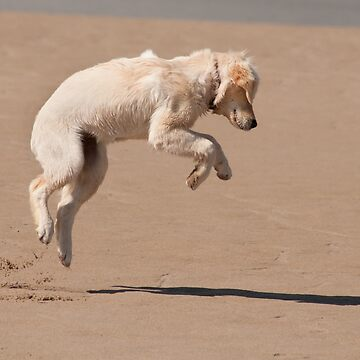 Leaps and bounds, Bannow beach, County Wexford, Ireland by AndyJones