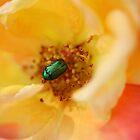 Green Dock Beetle by SnezanaPetrovic