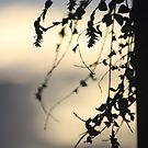 Silhouette by bero84