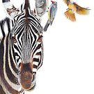Horse Whisperer - zebra coloured pencil drawing by Peter Williams