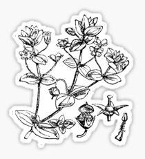 Vintage Flower- herbs Sticker