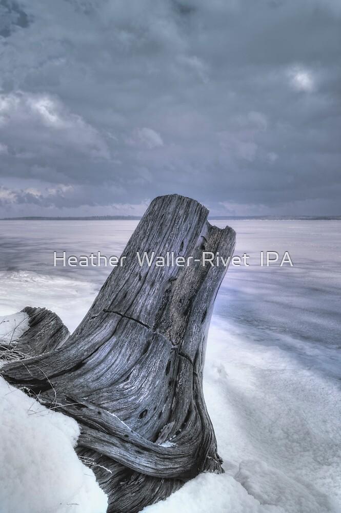 Winters Shore by Heather  Waller-Rivet  IPA