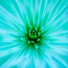 Succulent by alan shapiro