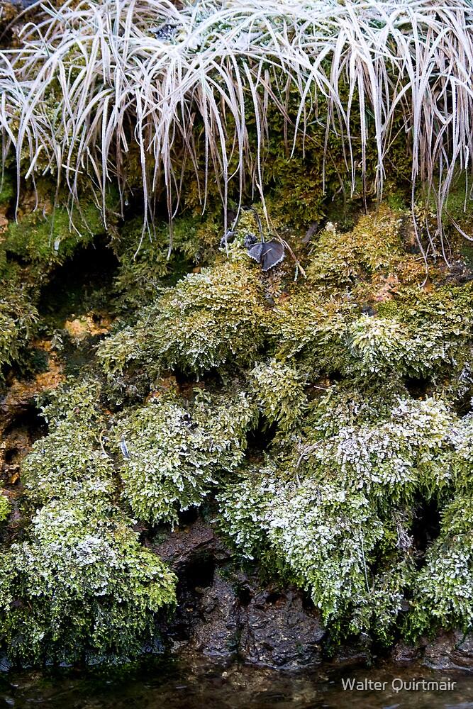 Frozen World - Moss by Walter Quirtmair