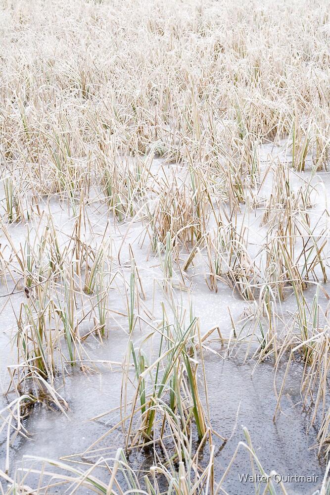 Frozen World - Reed by Walter Quirtmair