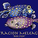 Box Fish by Julie Ann Accornero
