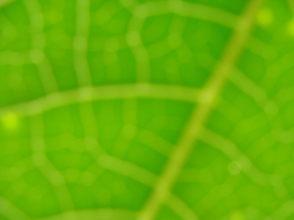 leaf abstract by becreative