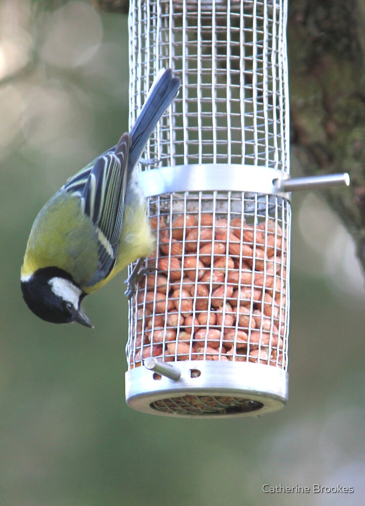 Great Tit by Catherine Brookes