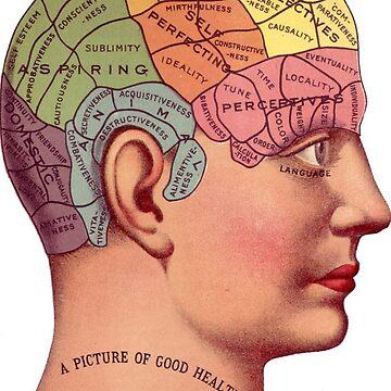 Phrenologie-Kopf von phantastique