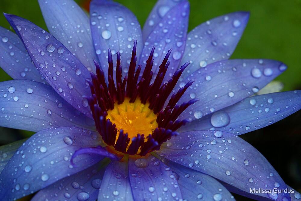 Royal Blue by Melissa Gurdus