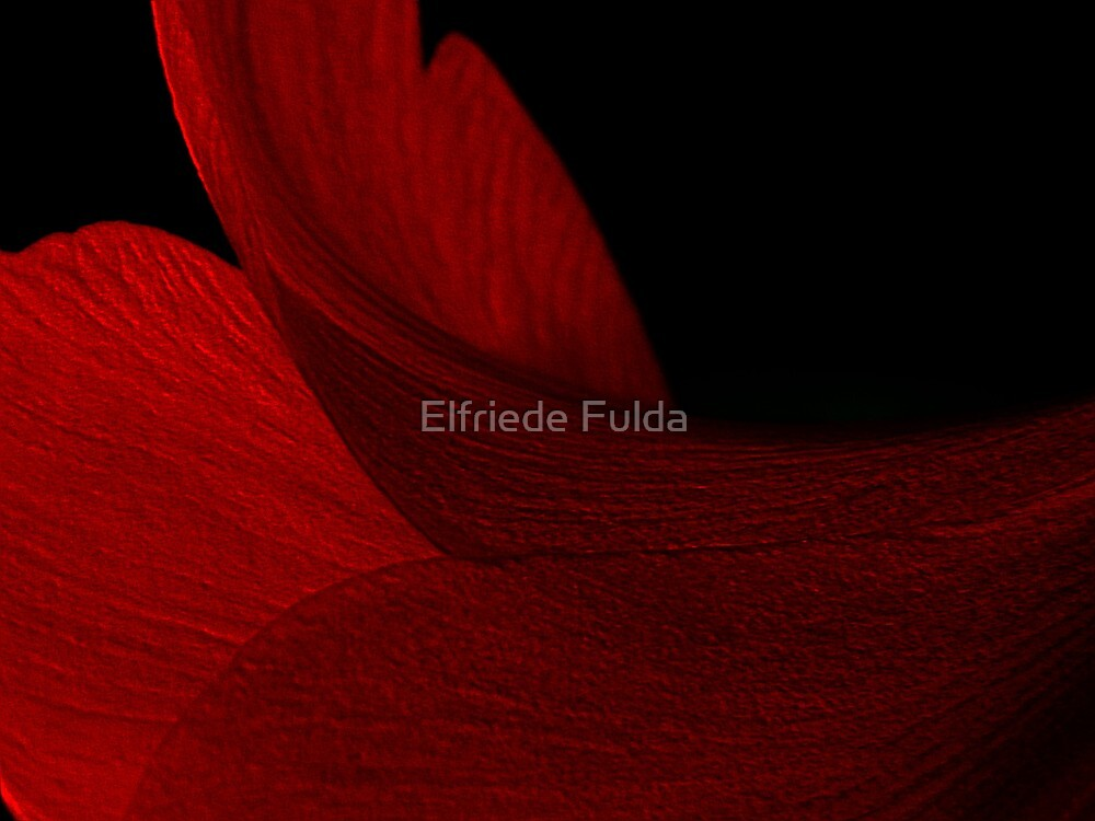 Crimson Petal ! by Elfriede Fulda