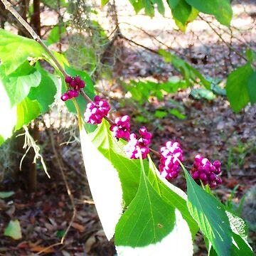 Morning Berries by RagingRawr