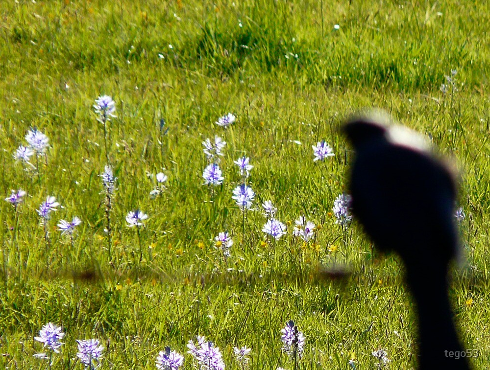bird on a fence by tego53