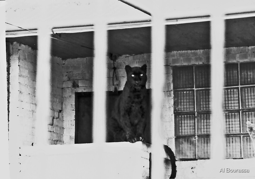 Unhappy Panther 1976 by Al Bourassa