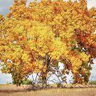 A Grand Old Tree by JOSEPHMAZZUCCO