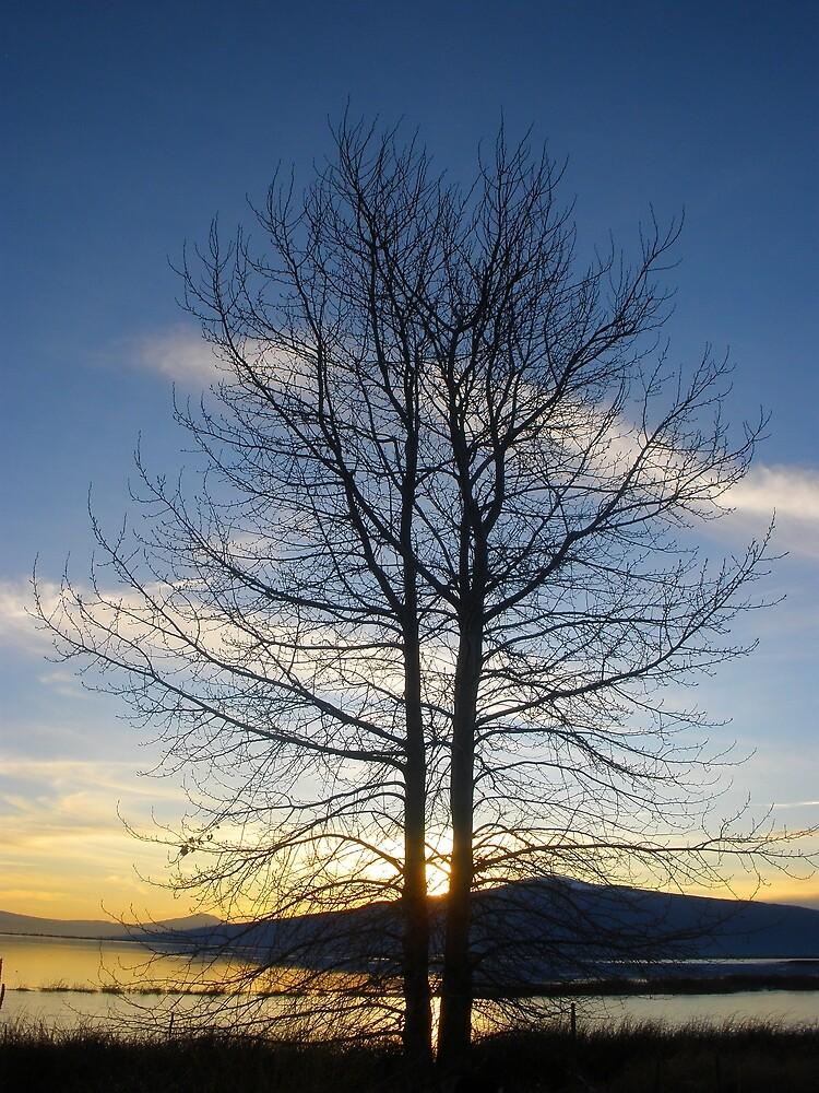The Sunset Trees by Thundercatt99