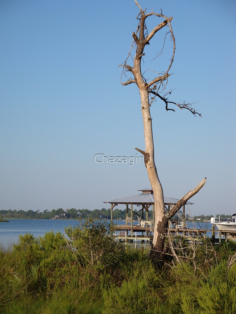 Bon Secour River Tree by Chazagirl