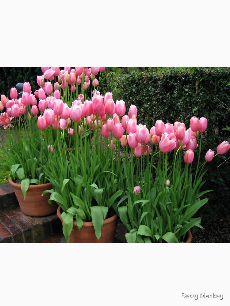 Pink Tulips by BettyMackey