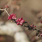 Spring  by Briana McNair