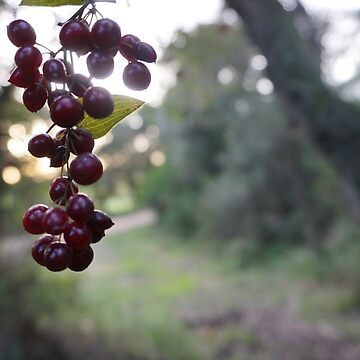 red berries by GalloPolloLoco