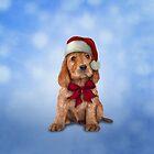 English Cocker Spaniel in red hat of Santa Claus by bonidog