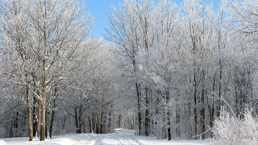 White Flocked Trees by swaby