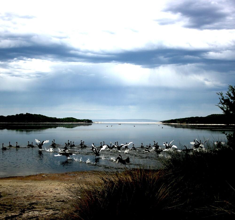 ~~~SWAN LAKE~~~ by myketrop