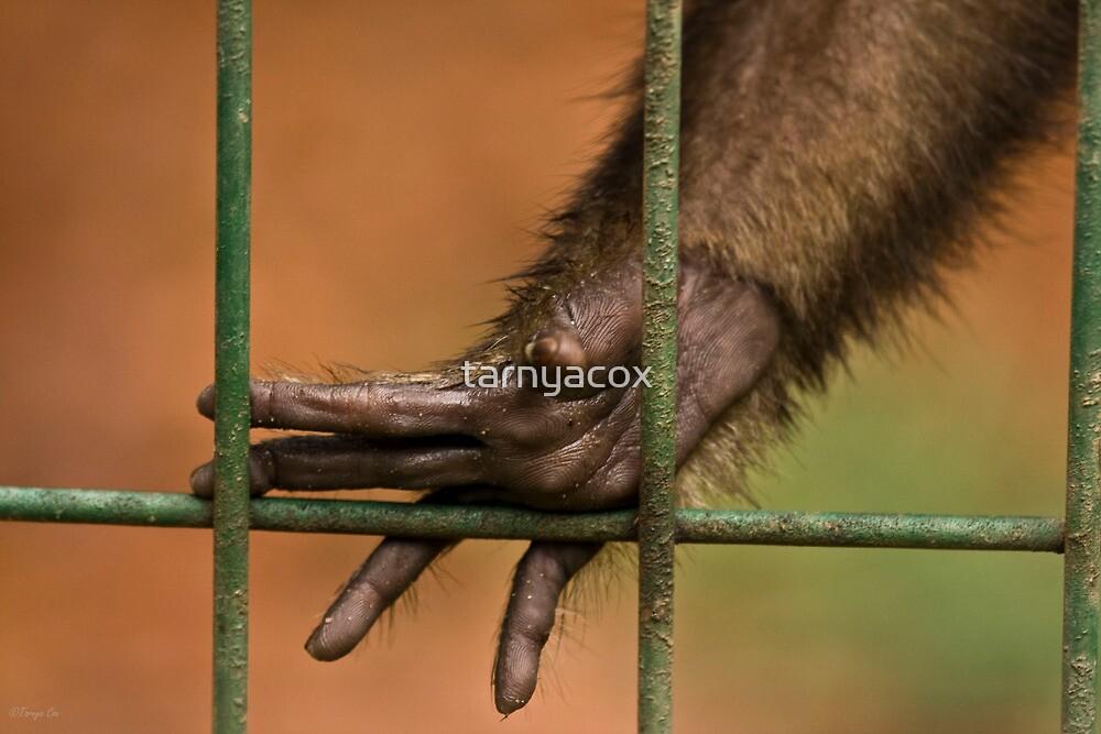 Captive by tarnyacox