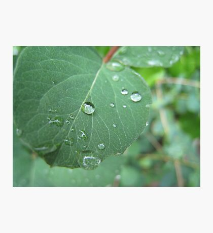 Raindrops keep falling on my leaf. Photographic Print