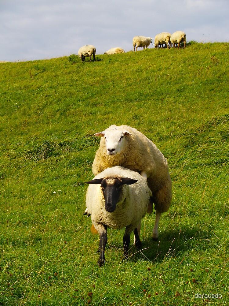 mating sheep by derausdo