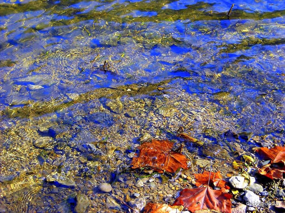 Rocks, Water and Leaves by debbiedoda