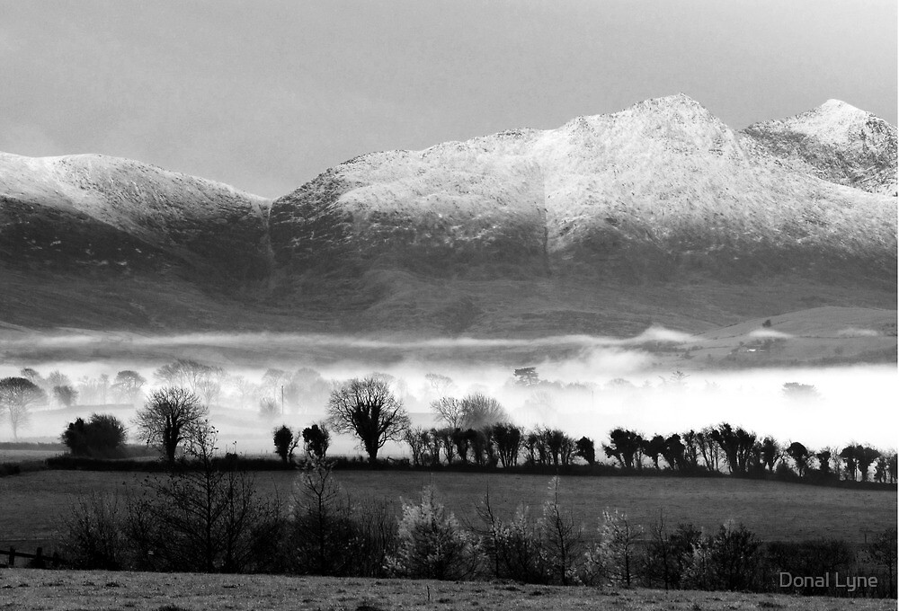 Cold Morning by Donal Lyne