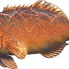Coral Trout by David Pearce