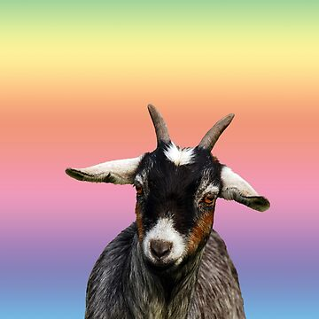 Baby goat on a rainbow background by LisaRent