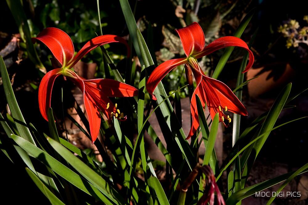 So red! by MDC DiGi PiCS