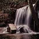 Laurel Falls by Phillip M. Burrow